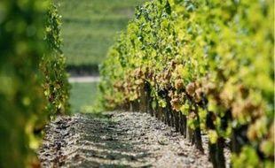 En Gironde, 1 000 hectares de surfaces agricoles disparaîtraient chaque année.