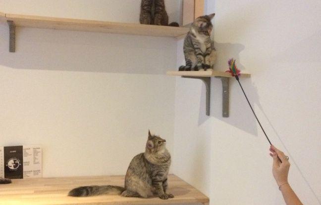 Les chats disposent de perchoirs sur lesquels ils peuvent s'isoler quand ils ne souhaitent pas être caressés.
