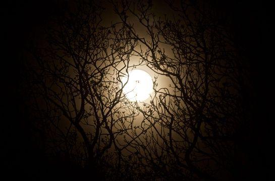 La «Super Lune rose» dans le ciel de Emmer Green (Berkshire), en Angleterre.