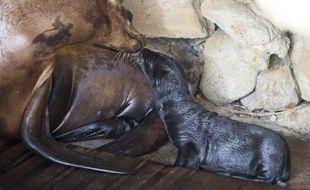 Lilly et son petit juste après la naissance