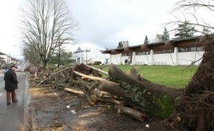 Des arbres déracinés dans le centre de Brive-la-Gaillarde le 14 février 2016