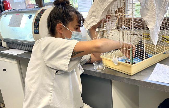L'infirmerie du centre de soins pour animaux de la LPO à Audenge (Gironde)