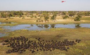 Vue aérienne de  réserve de Moremi Game au Botswana.