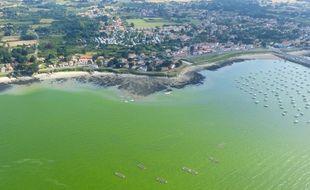 Eau colorée verte due à la prolifération de la microalgue Lepidodinium chlorophorum en Loire-Atlantique