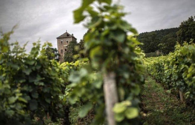 Les riches chinois qui rachètent des vignobles français, comme ils viennent de le faire pour 8 millions d'euros au château de Gevrey-Chambertin (Côte d'Or), sont annonciateurs d'une vague d'achats qui pourrait à l'avenir s'élargir à d'autres crus prestigieux, selon des experts.