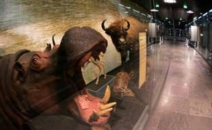 Ouvert en 1865, le Muséum d'histoire naturelle a été repensé et rénové de fond en comble.