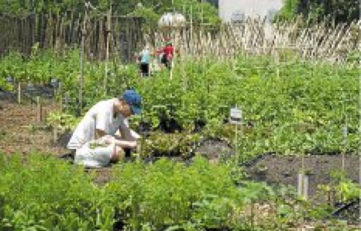 Une ferme urbaine bio à Manhattan en juin 2011. –  ROBERTS / SIPA