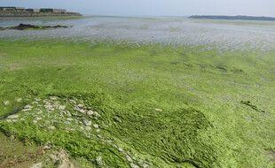 La plage de Hillion, ici envahie par les algues vertes en 2019.
