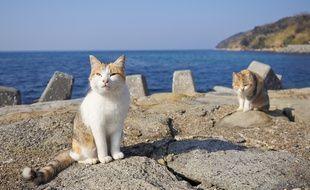 Des chats sur l'île japonaise d'Aoshima.