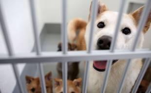 Illustration de chiens dans une cage.