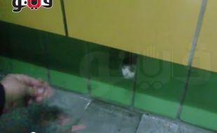 Un chat emmuré dans une station de métro du Caire passe la patte par un trou.