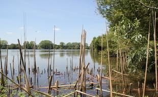 Image d'illustration des étangs d'Apigné, à Rennes.