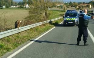 La gendarmerie d'Alzonne, dans l'Aude, est intervenue pour secourir un vautour fauve, le 4 novembre 2018.