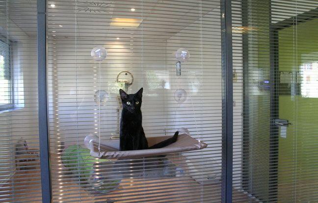 marseille une nouvelle adresse premium pour faire garder son chat. Black Bedroom Furniture Sets. Home Design Ideas