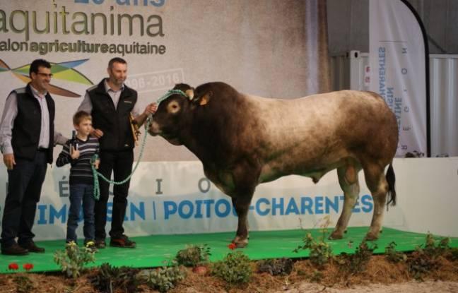 Le taureau Incognito de Richard Beziat sera au salon de l'agriculture à Paris cette année