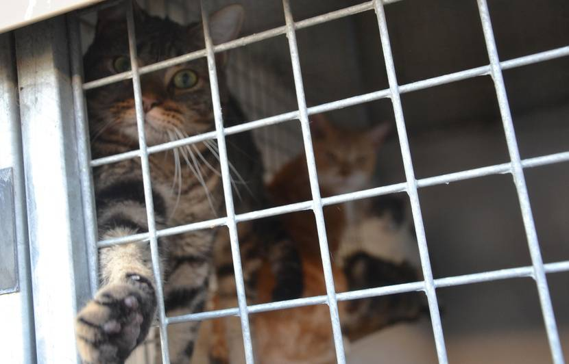 Montpellier Face A Une Surpopulation De Chats La Spa Lance Un