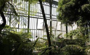 Près d'une plante sauvage sur trois est menacée de disparition en Ile-de-France, essentiellement du fait de la destruction des habitats naturels de la flore régionale, indique la première liste rouge établie par le Muséum national d'Histoire naturelle.