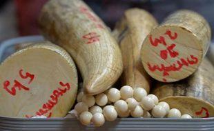 Deux Vietnamiens ont été arrêtés avec plus de 100 kilos d'ivoire dans leurs bagages, à leur arrivée à l'aéroport de Bangkok depuis l'Angola, ont annoncé vendredi les douanes de Thaïlande, plaque tournante du trafic d'ivoire africain vers la Chine et le Vietnam voisins.