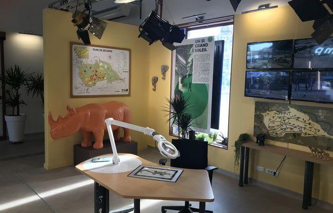 Le corner Un si grand soleil, à l'office de tourisme de Montpellier, qui reproduit le décor du zoo