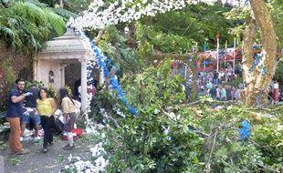 La chute d'un arbre bicentenaire fait 12 morts