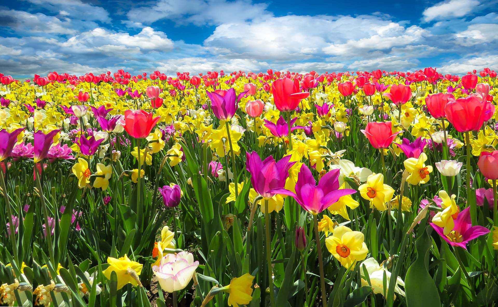 Pourquoi tombe-t-il encore un 20 mars — Équinoxe de printemps