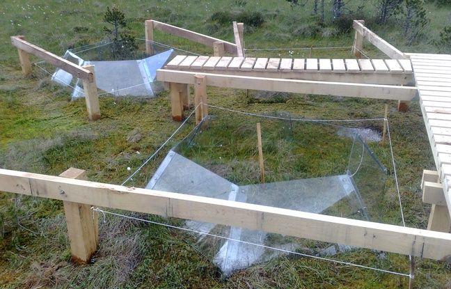 Les chercheurs ont installé un système de serres autour de la tourbière pour faire monter la température.