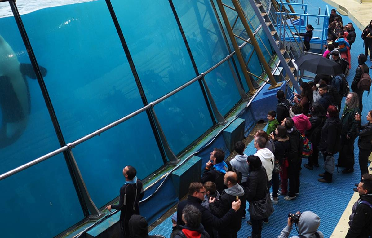Après les représentations, le public peut aller 'Plus près des orques' – F. Binacchi / ANP / 20 Minutes