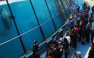 Après les représentations, le public peut aller 'Plus près des orques'