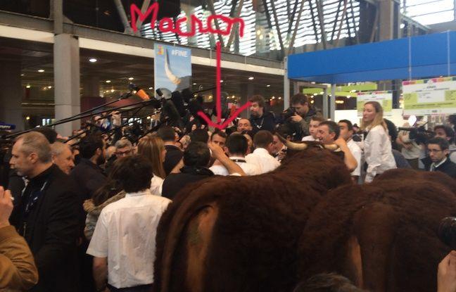 En plissant les yeux, vous pouvez apercevoir Emmanuel Macron au-dessus de la croupe de la vache.