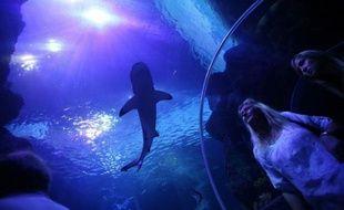 Malgré son aileron et ses impressionnantes mâchoires, le requin tue dix fois moins que les méduses, soulignent des spécialistes pour qui la psychose suscitée par les squales, comme à La Réunion, reste sans rapport avec le nombre d'attaques dans le monde.