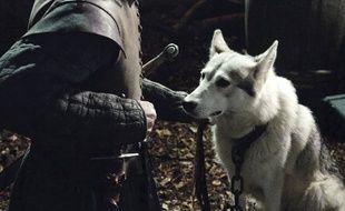 Lady, la louve de Sansa, a payé de sa vie la fougue de sa sœur Nymeria, louve d'Arya