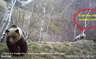 Extrait d'une vidéo d'un ours mâle en compagnie d'une femelle, le 4 mai, en Ariège.