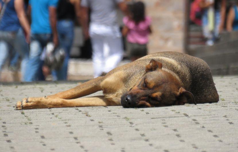 Des cadavres de chiens abandonnés sur une route? Retour sur le détournement d'une photo célèbre