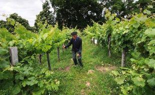 Une vieille parcelle de vigne du Gers, au coeur de l'appellation Saint-Mont, vient d'être inscrite aux Monuments historiques, une première en France où les vieilles pierres sont plus souvent distinguées que le patrimoine végétal.