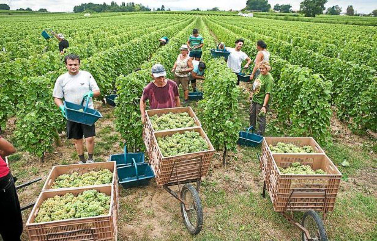 Vendanges à Martillac (Bordeaux Graves) en août 2011 – S.ORTOLA/20MINUTES