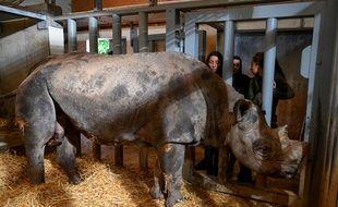 Jacob, l'unique rhinocéros noir du zoo de Pont-Scorff, s'est éteint le 31 décembre à l'âge de 28 ans.