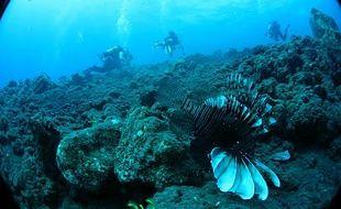 Plongée dans les coulées de lave sous-marine de la Réunion, au pied du Piton de la Fournaise.