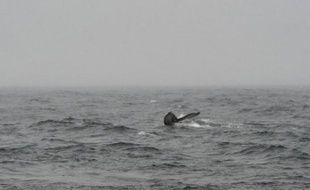 Une baleine noire du Pacifique Nord, l'un des animaux les plus menacés d'extinction, a été observée ces derniers jours pour la première fois en plus de 60 ans au large des côtes occidentales du Canada, a annoncé jeudi le ministère des Pêches et des Océans.