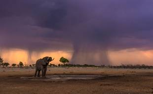 Le Botswana prend la protection des animaux sauvages très au sérieux