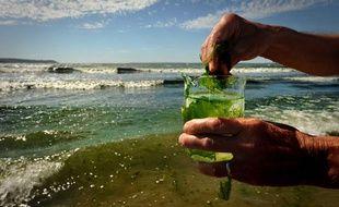 Des prélèvements sont réalisés à chaque marée verte en Bretagne afin de mesurer le taux d'azote contenu dans les algues, ici à Douarnenez en juillet 2010.