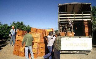 De la main d'oeuvre dans une exploitation agricole en Espagne en 2004.