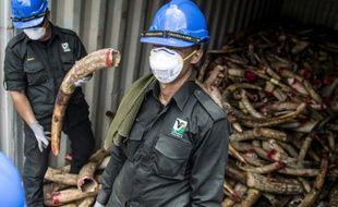 Les autorités malaisiennes transportent l'ivoire saisie qui va être brûlée, à Port Dickson, le 14 avril 2016
