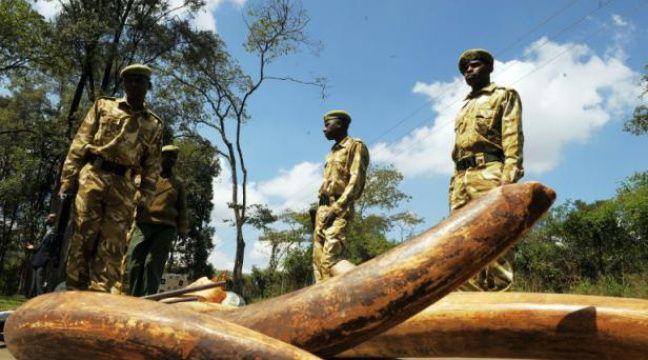 Des rangers kényans près de défenses d'éléphant, le 30 novembre 2009 – SIMON MAINA AFP
