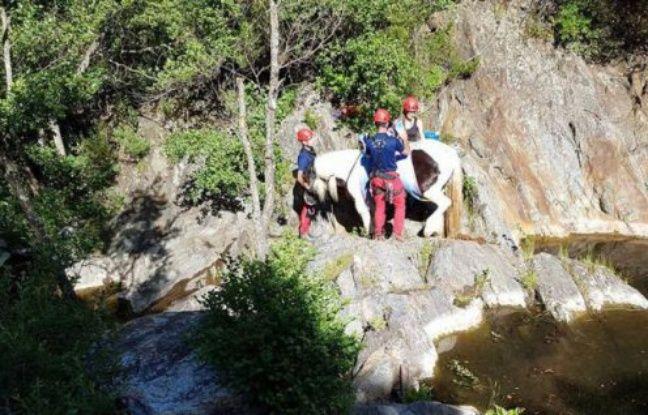 Les hommes du Groupe de reconnaissance et d'intervention en milieu périlleux ont dû hélitreuiller le cheval victime d'une chute de 30 mètres dans les Pyrénées-Orientales
