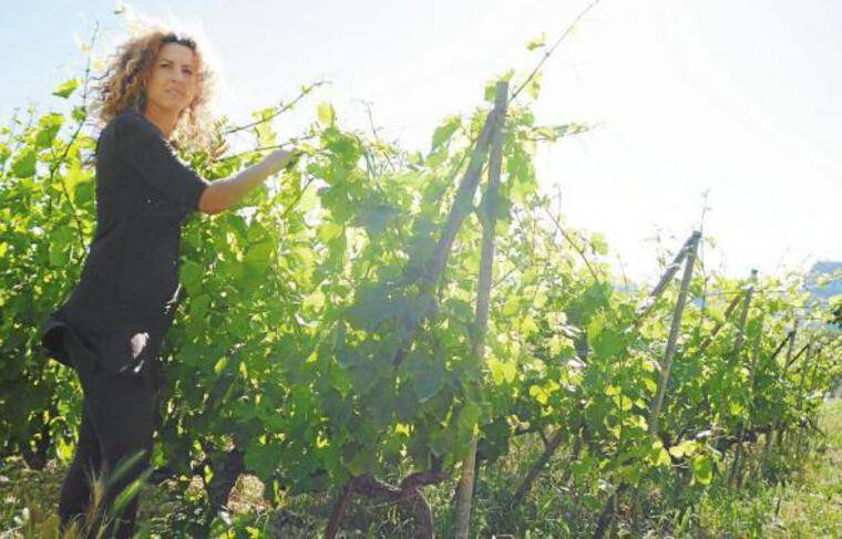 Carine Dalmasso vient de convertir ses vignes au bio, après quatre ans de travail.