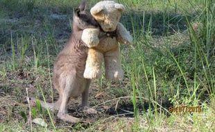 Postée sur Twitter, la photo de Doodlebug, un kangourou orphelin, abandonné  par sa 2ffd868001d
