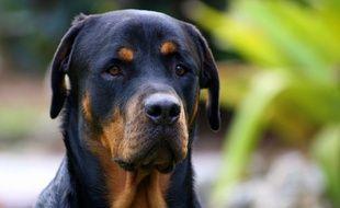 Deux rottweilers ont attaqué un garçon de 10 ans à Mozac, dans le Puy-de-Dôme.