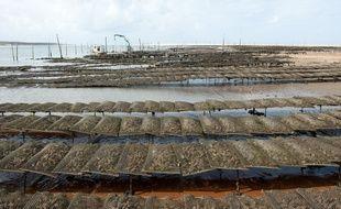 Pyla-sur-Mer, 30 aout 2012. - Ostreiculture sur le banc d'Arguin face a la dune du Pyla. Ostreiculteurs. Huitres. - Photo : Sebastien Ortola