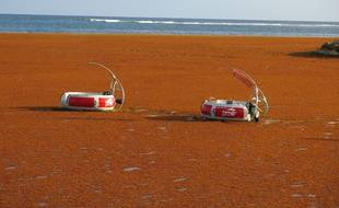 Les sargasses, ici à Sainte-Anne, ont bloqué La Désirade et l'île de Terre-de-Bas, en Guadeloupe.