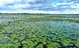 Le lac de Grand-Lieu, plus grand lac de plaine de France.